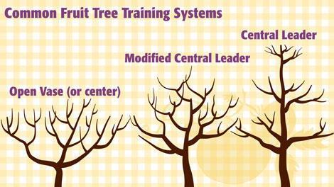 Tree Training Systems 470x